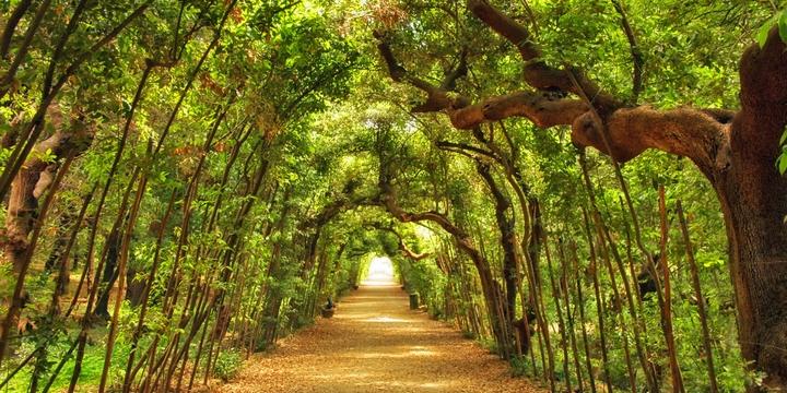I giardini di Firenze a Il_Laboratorio Terza Cultura