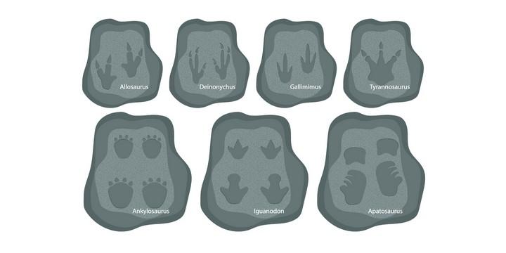 """Dinosauri e impronte """"family"""" di Terza Cultura presso Il_Laboratorio (Firenze)"""